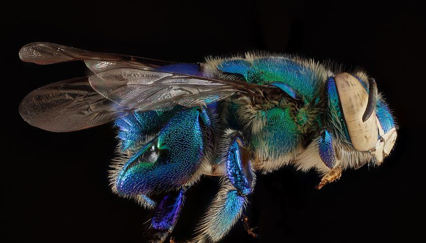 Bienenfotos