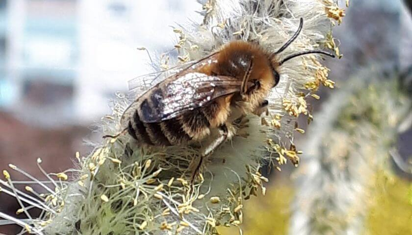 Europa stimmt für Bienenschutz