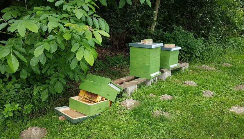 Vandalismus: Bienenvolk umgeworfen