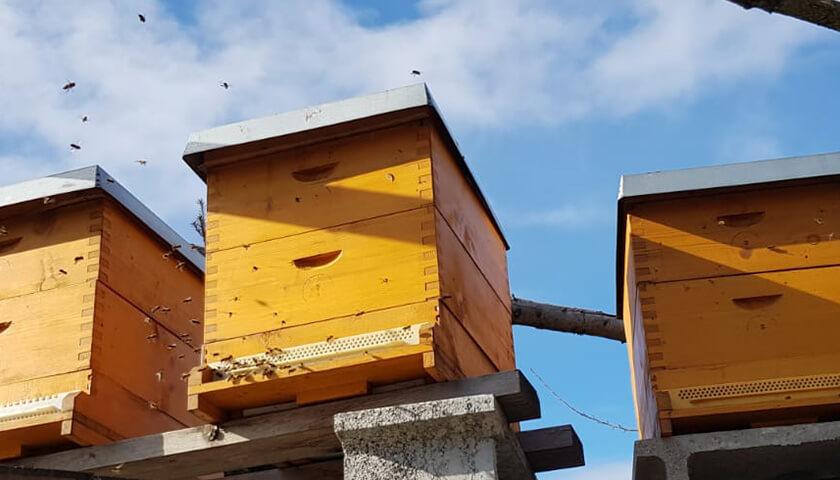 Bienenflug im Februar
