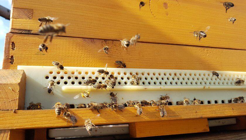 Bienen bringen Pollen