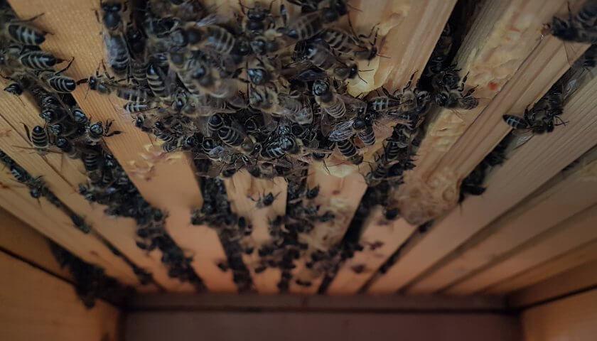 Bienen hängen durch