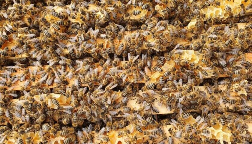 Viel los im Bienenvolk