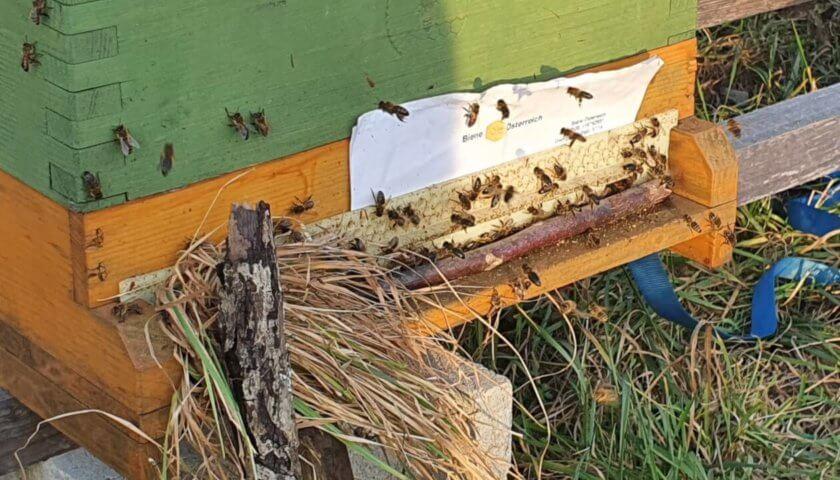 Räuberei am Bienenstand im Februar