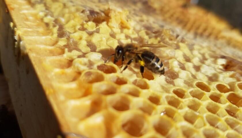 Bienen-Futterrevision