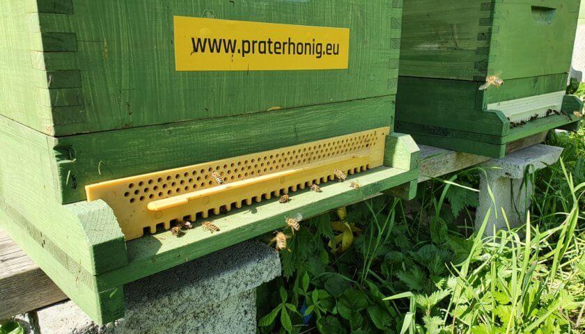 Prater-Bienen